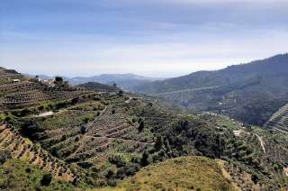 Plot of land , Almuñécar, Costa Tropical, Granada
